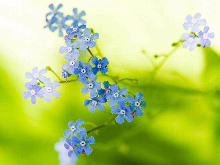 26 Beautiful Flower Wallpapers