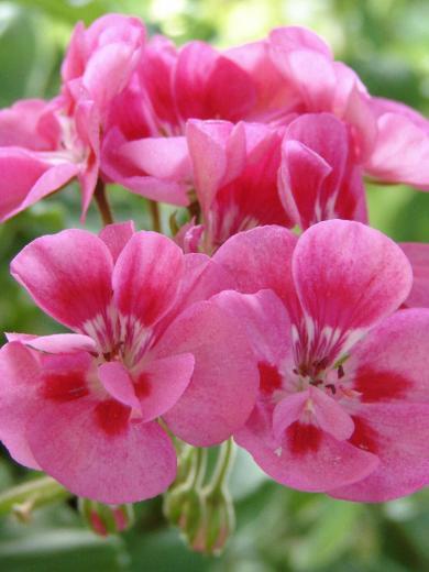 summer flowers twitter backgrounds summer flowers twitter layouts