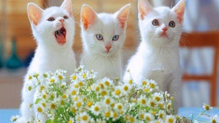 Cute Cats and Kittens Wallpapers   Top Cute Cats and Kittens