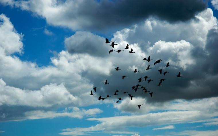 flying birds widescreen background wallpapers dan pontefract