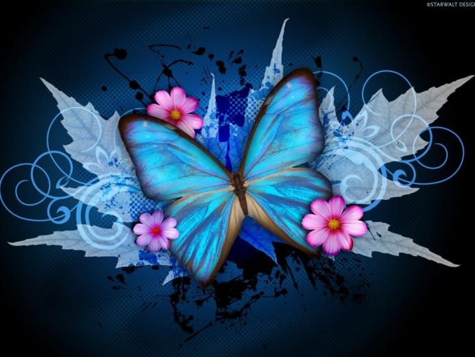 cynthia selahblue cynti19 images Blue Butterfly HD wallpaper and