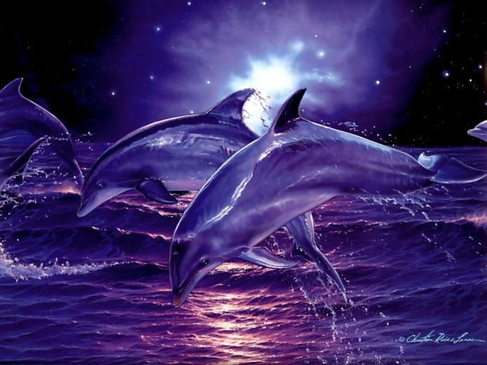 3d Digital Dolphins hd Wallpaper High Quality WallpapersWallpaper