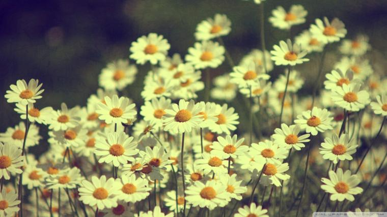 want daisies in my hair green tea in my hand and love in my heart