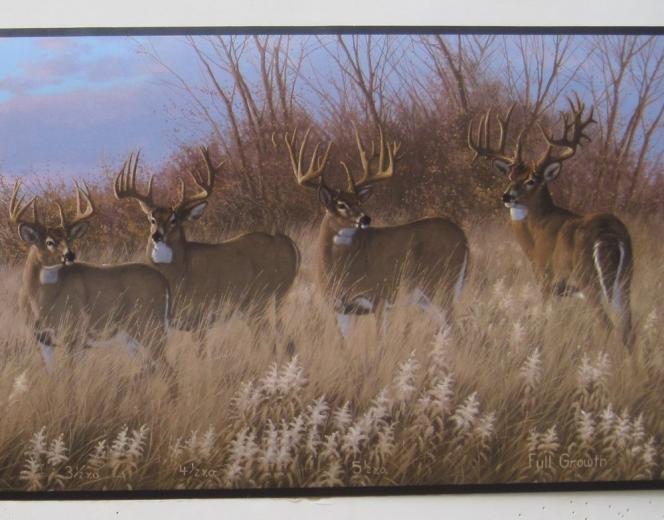 Deer Buck Doe Hunting Outdoors Wildlife Wallpaper Border 9 eBay