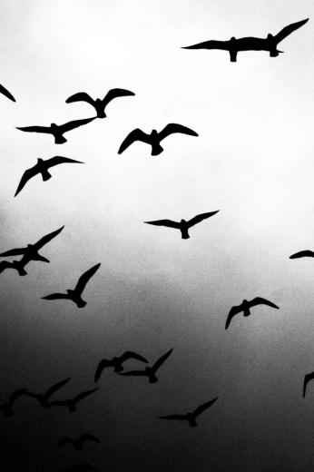 Flying Birds iPhone Wallpaper HD