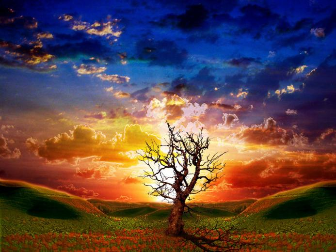 Online Wallpapers Shop Animated Wallpapers Animated Pictures