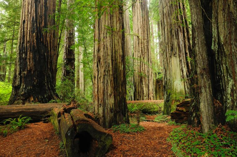 10 Best HD Redwood National Park Wallpapers