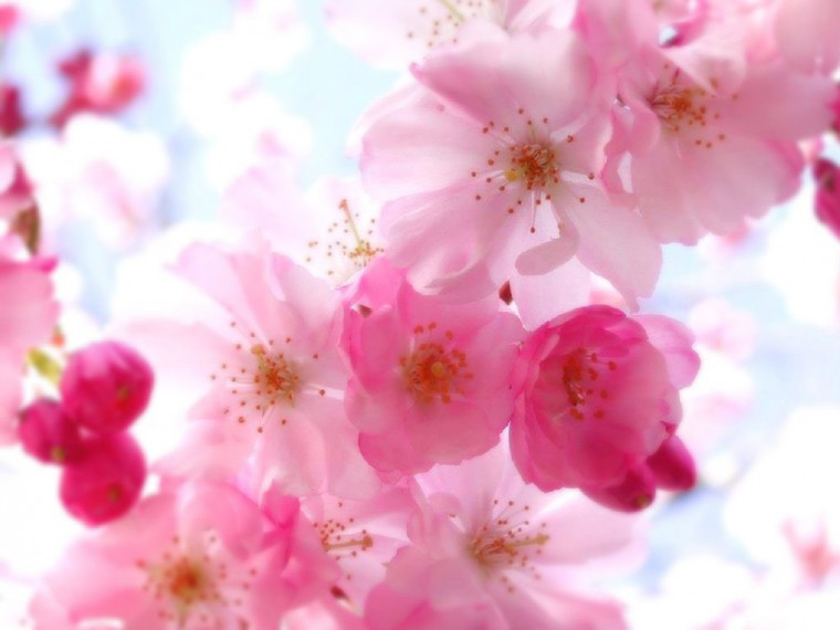 Home Nature Flowers Plants Pretty Flower Backgrounds