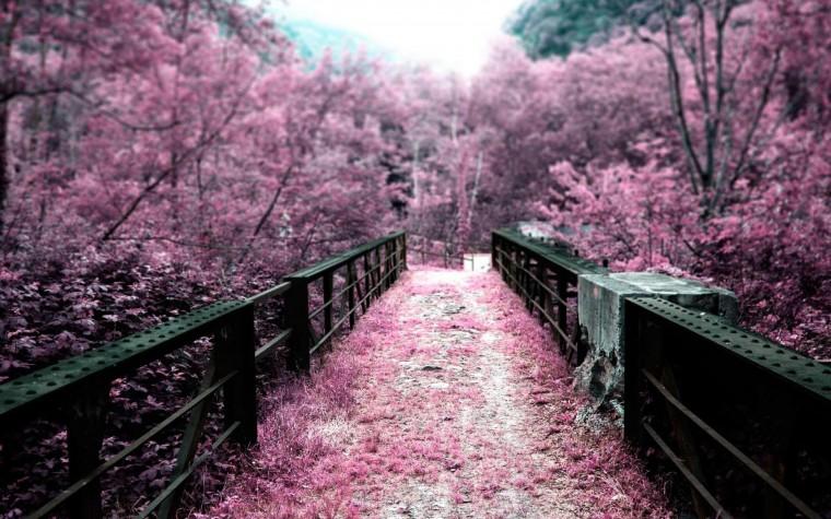 pink nature scenery wallpapers walljpegcom