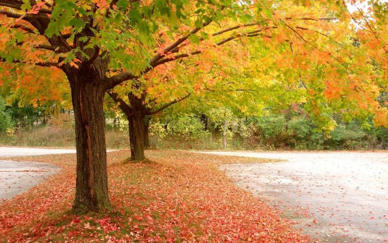 Natural Beauty Wallpaper Download
