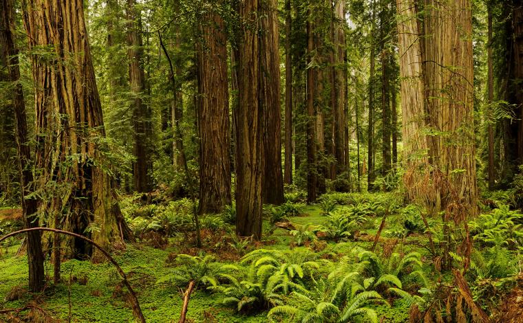 Images California USA Redwood National And State Parks 2560x1584