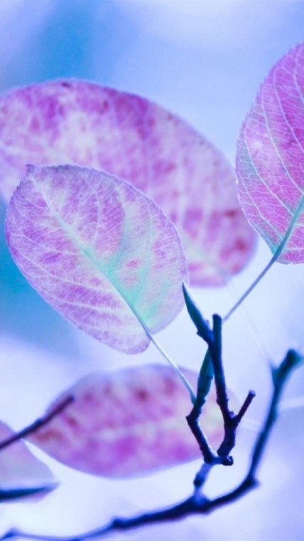 Cute Purple Leaves HD Wallpaper for Iphone iPhone Wallpapers Site
