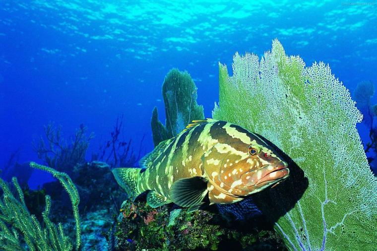 Desktop Backgrounds chillcovercom Underwater Ocean Life Desktop
