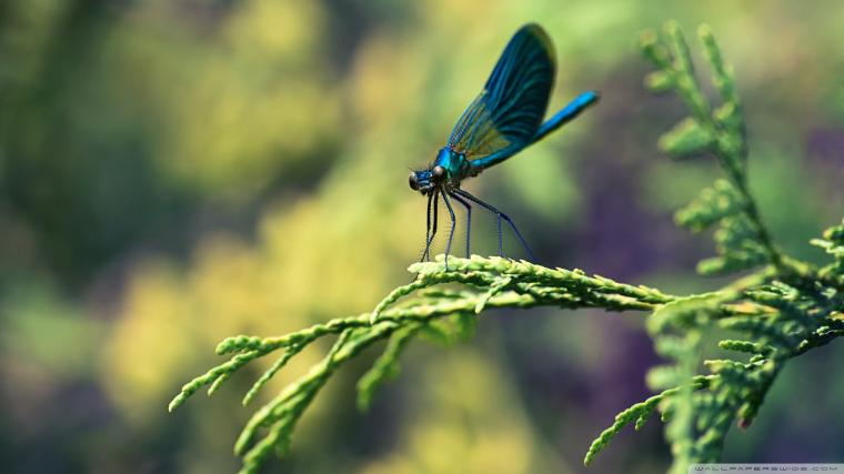 Blue Dragonfly Macro Wallpaper 1920x1080 Blue Dragonfly Macro