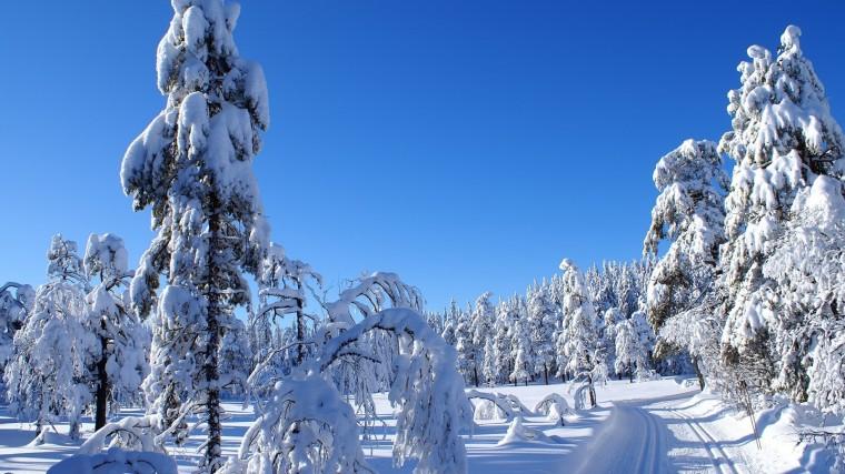 beautiful winter scenery winter wallpaper winter snowfall beautiful