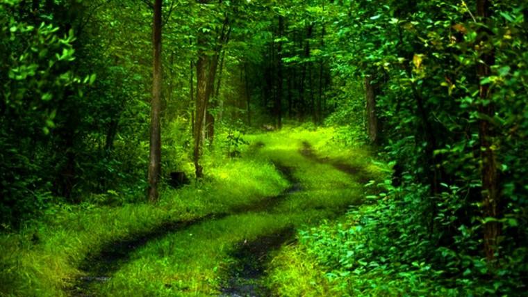 path of nature wallpap er Hd Natural Wallpaper Download