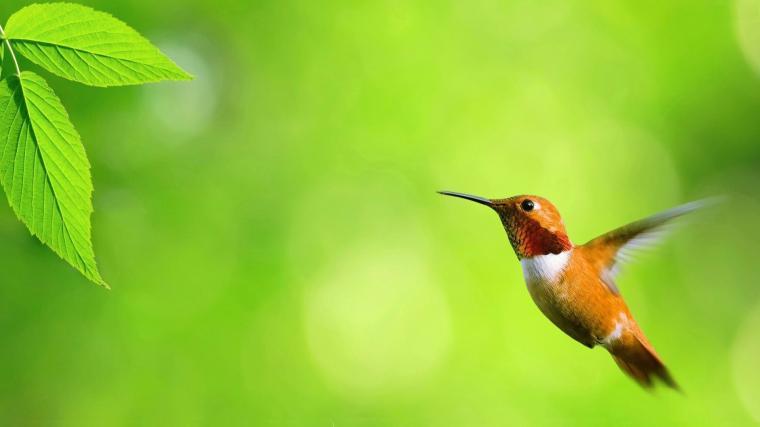 Flying Birds Desktop Wallpapers Flying Birds Images New