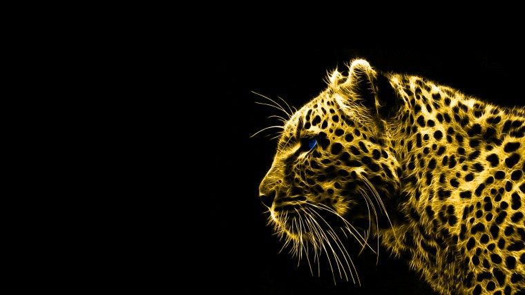 animals gold spirit leopards black background HD Wallpaper