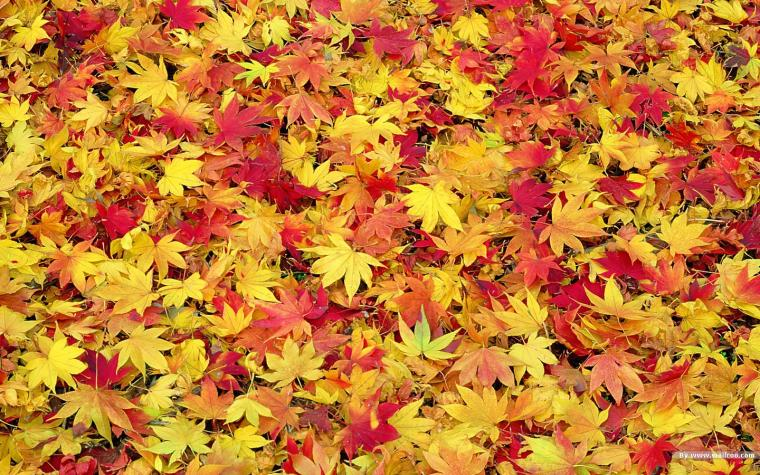 Fall Leaves Wallpaper   HD Wallpapers