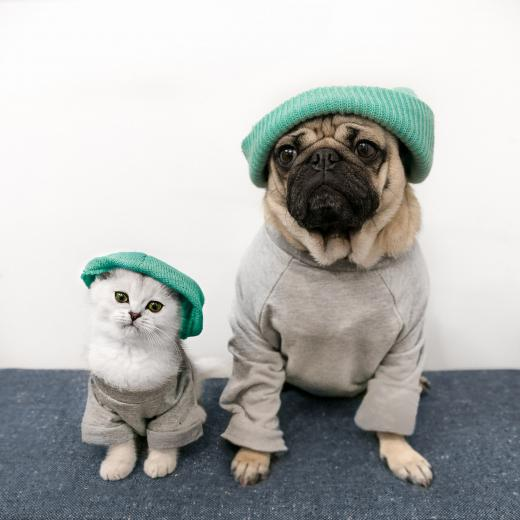 Dog the Pug Gets Kitten Sister Named Fiona PEOPLEcom