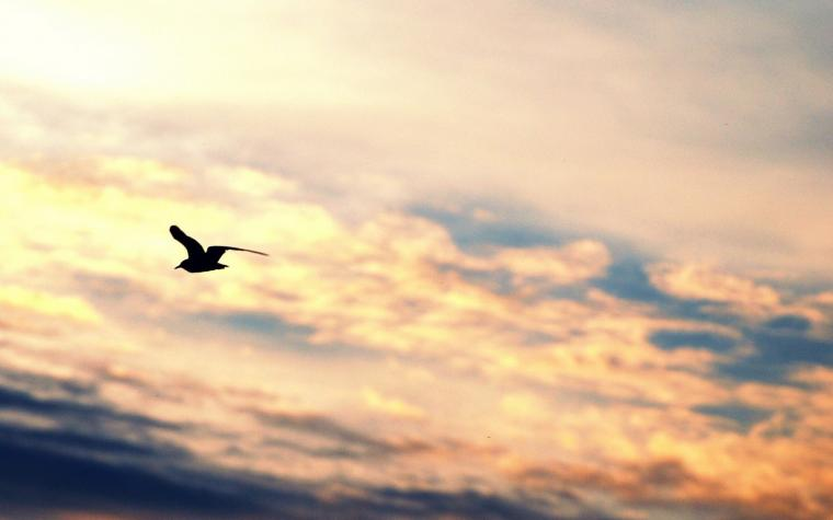 bird flying silhouette gull freedom sky hd wallpaper   Magic4Wallscom
