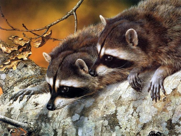 Desktop Wallpapers Backgrounds Animals Wallpapers Wallpapers