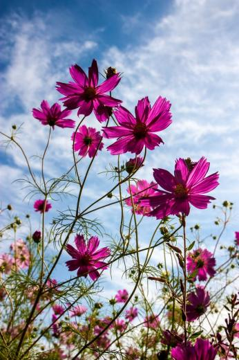 Flowers by Tom Doleal WallpaperBackground Scenes Flowers
