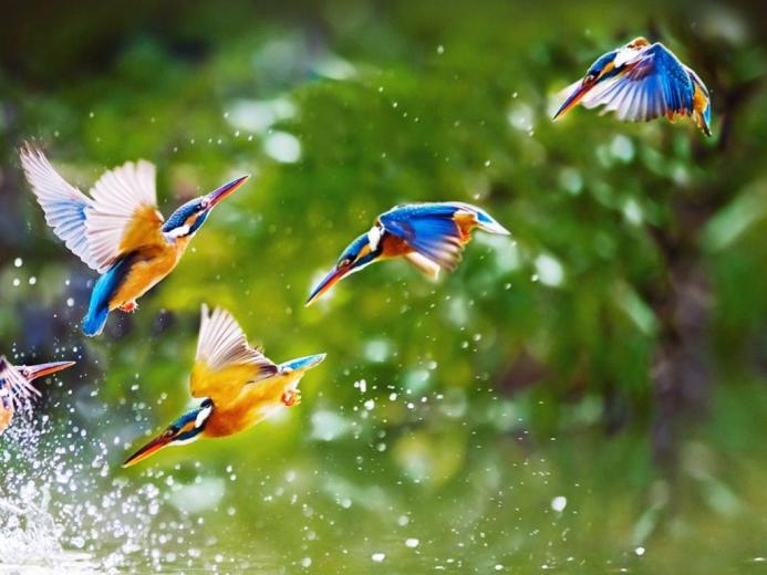 Flying Birds HD Wallpapers nature