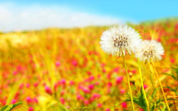 Cute Summer Backgrounds Hd Backgrounds 5 High Wallpaperizcom