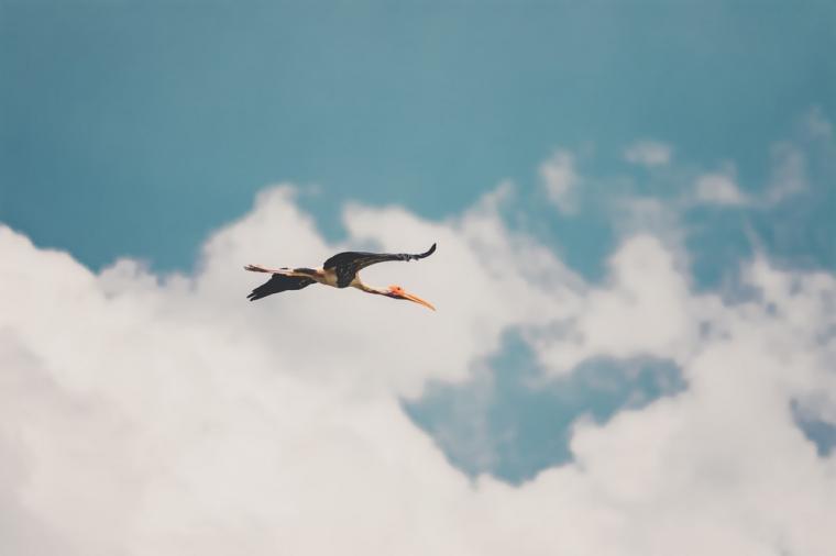 500 Flying Bird Pictures Download Images on Unsplash