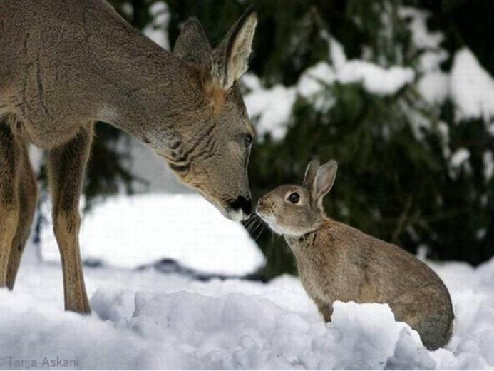 deer wallpaper for computerdeer pictures deer desktop wallpaperfree
