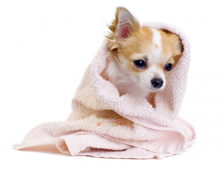 Beauty Cute Dog Wallpaper here you can see Beauty Cute Dog Wallpaper