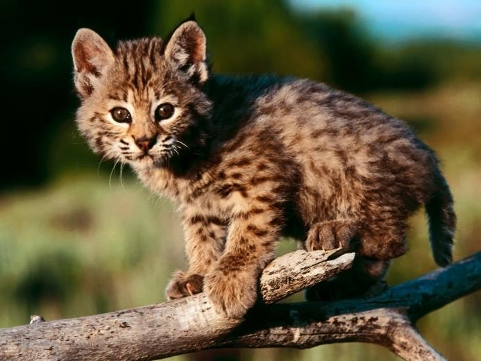 Cute Kittens images Cute Wallpapers HD wallpaper and background photos