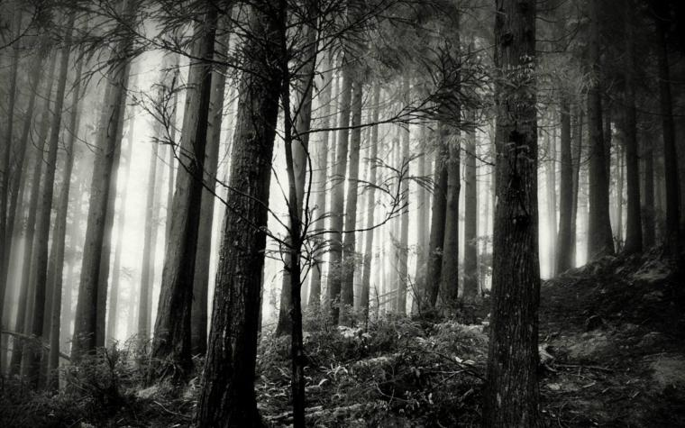 Black And White Forest Wallpaper   HD Wallpapers Pretty
