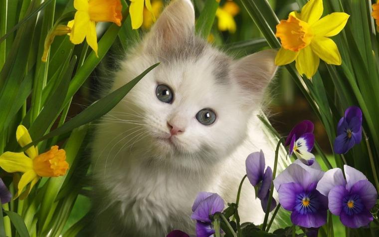 Cute Kitten   Kittens Wallpaper 16096569