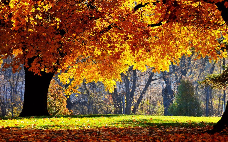 Tag Beautiful Autumn Scenery WallpapersBackgrounds Photos Images