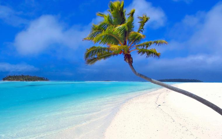 2560x1600 Isolated palm tree desktop PC and Mac wallpaper