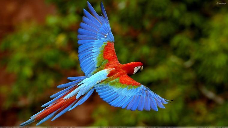 flying birds wallpapers   HD Wallpapers