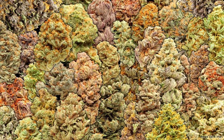 wallpaper Wallpaper Cannabis