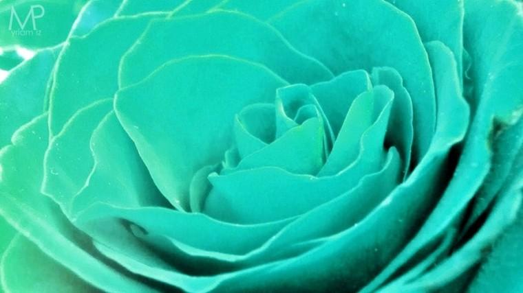 Картинка цвет аквамарин