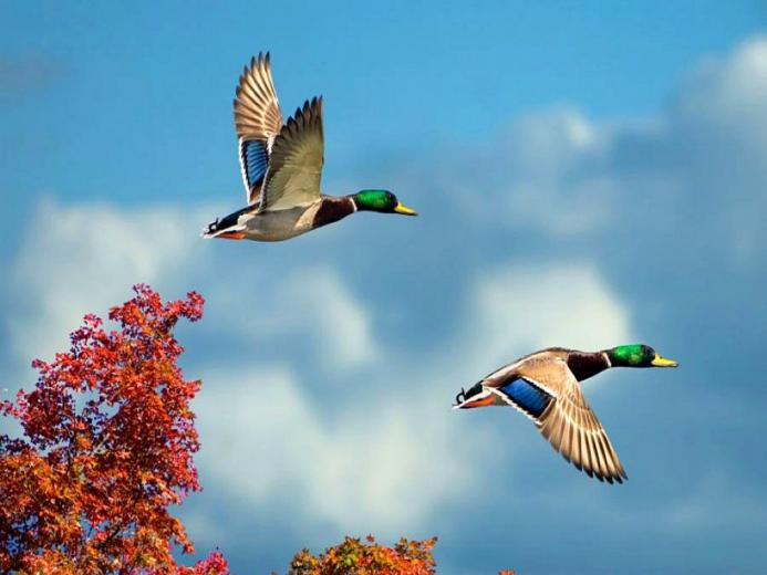 Birds Flying Wallpaper