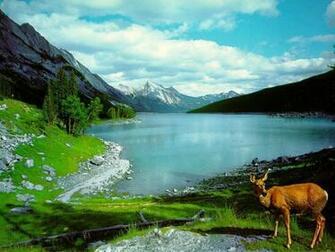 Cool Nature Desktop Backgrounds Desktop Backgrounds