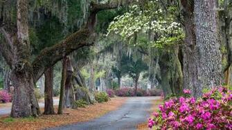 in Savannah Georgia wallpaper 1280x800 Beautiful park in Savannah