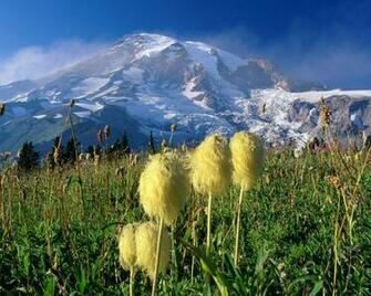 hd wallpaper backgrounds Mount Rainier National Park HD Wallpaper