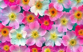 wallpaper Pink Flowers Wallpapers