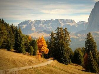 Images Italy Bolzano Trail Nature Spruce Autumn Mountains forest