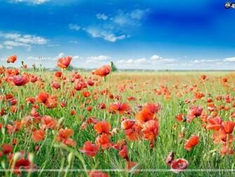 Flowers Wallpaper 157