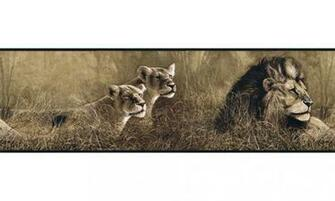 Home Animal Borders Wild Cats Animals Wallpaper Border B76463