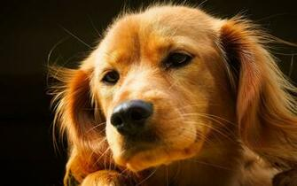 Cute Dogs Wallpapers For Desktop Puppy Backgrounds