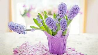 Easter Holiday 2020 Potted Hyacinths Home Download